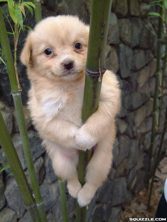 Gorgeous Blonde Pole Dancer