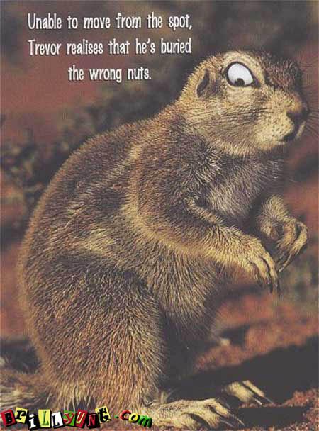 Wrong Nuts