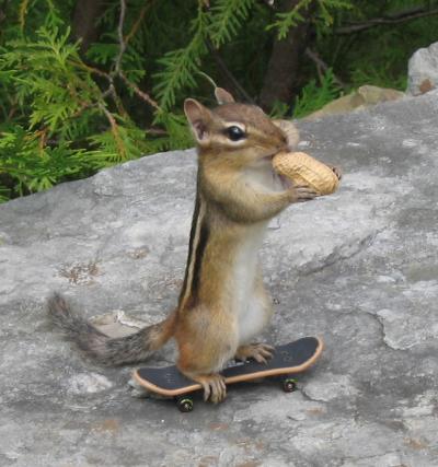 Chipmunk nuts